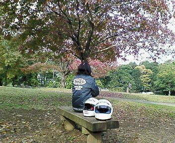 公園の紅葉具合。